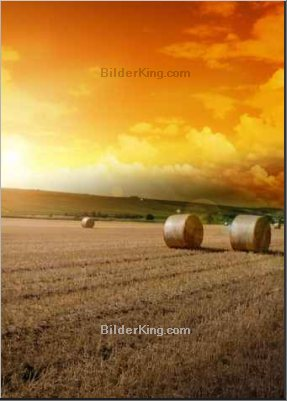 Print details - tobe_dw : Yellow grain harvested on a farm field