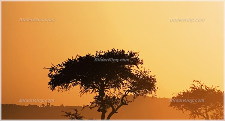 wandbild jack dyrell afrika morgen wandbilder leinwanddruck keilrahmenbilder kunstdruck. Black Bedroom Furniture Sets. Home Design Ideas